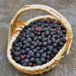 basket of black huckleberries (604x640)