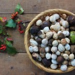 Hickory nuts in a basket (640x453)