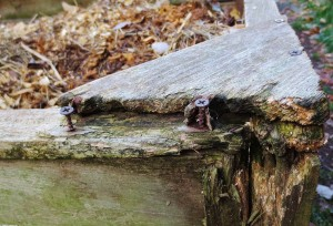 This compost bin is a bumblefoot hazard, with splintering wood and exposed screws.