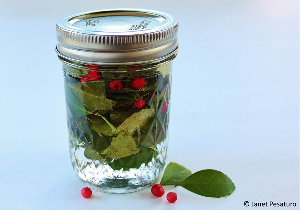 Wintergreen extract in progress: crushed leaves in vodka, with a few berries for color