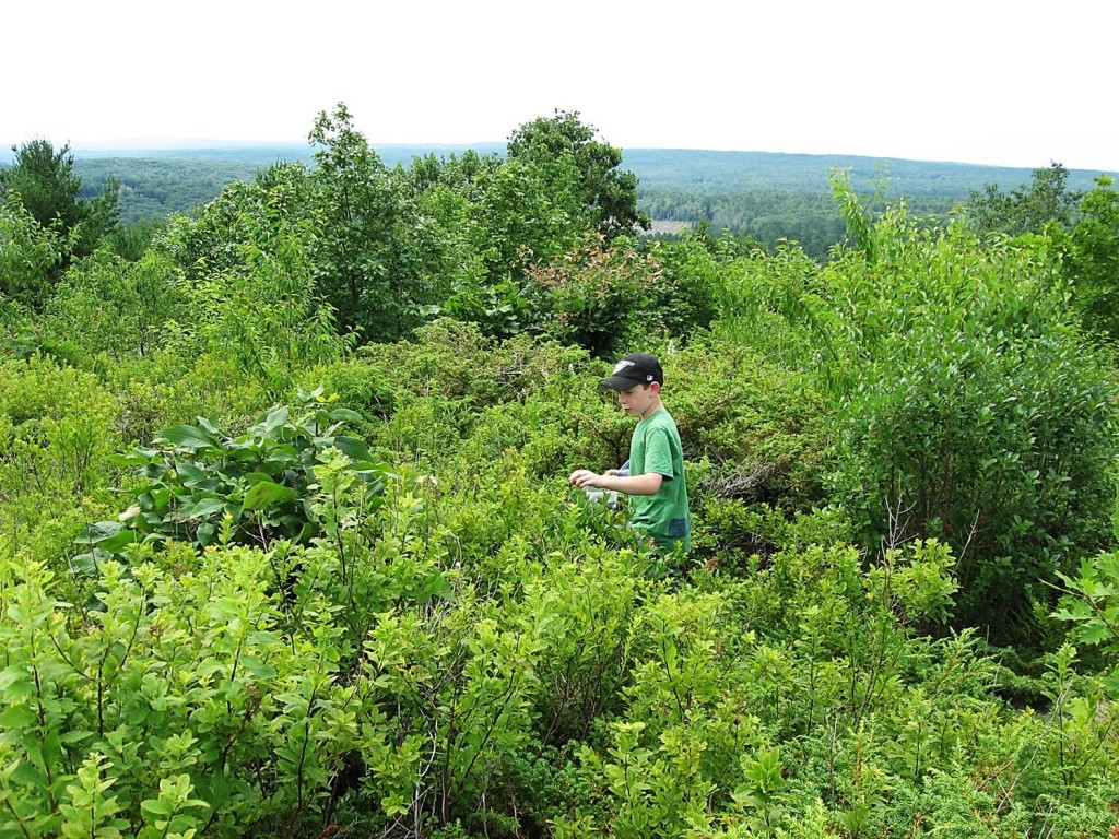 Steven gathering blueberries on a beautiful hill top. Teaching kids to forage helps them understand their dependence on nature.