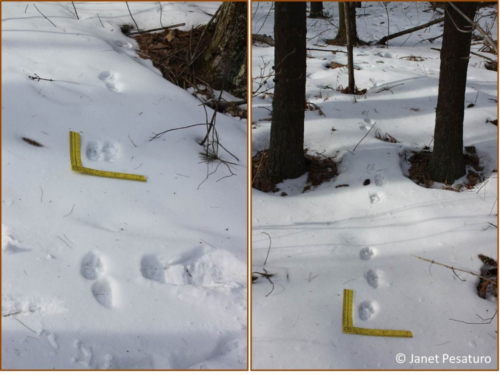 Otter trails: A 2-2 pattern on left, and a 3-4 pattern on right.