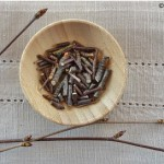 Yellow birch twigs have been chopped into small pieces and will be used to make wintergreen extract.
