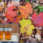 Sugar maple leaves and maple syrup