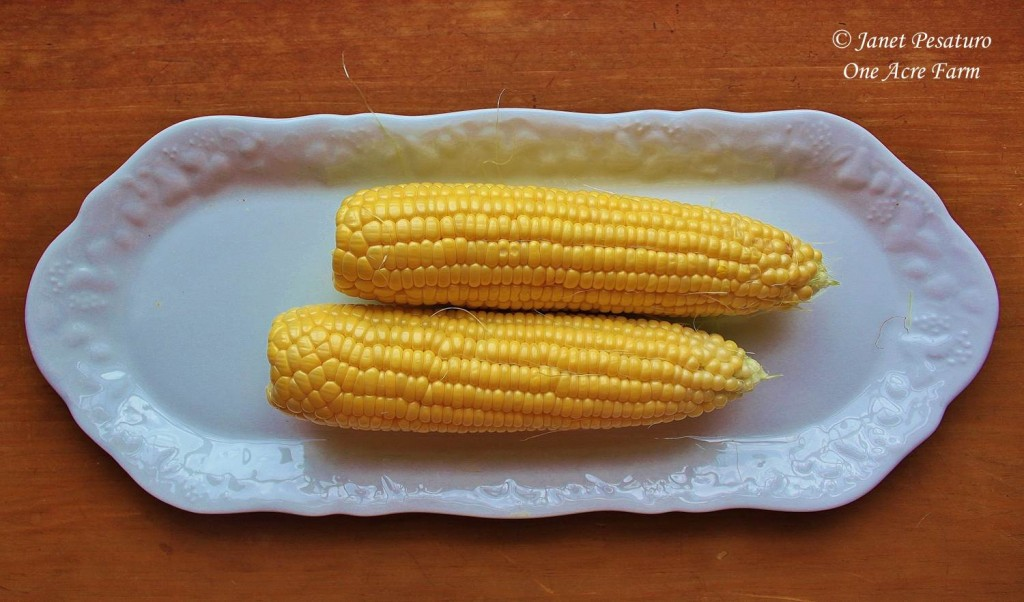 6 Tips for Growing Corn in Small Spaces. Using these tips, most of our corn looks just like these two ears: Full of sweet, plump kernels!