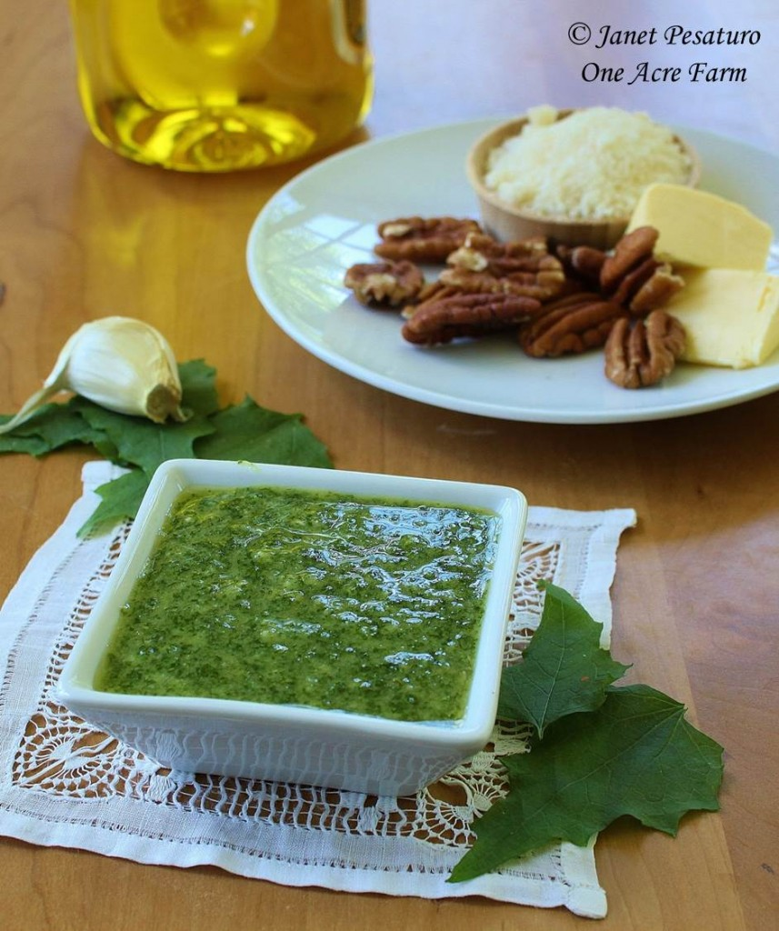 Garlic mustard pesto with baby spinach