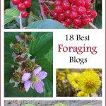 18 Best Foraging Blogs