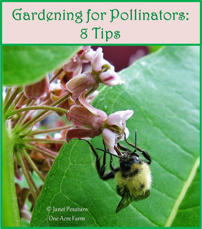 Gardening for Pollinators: 8 Tips