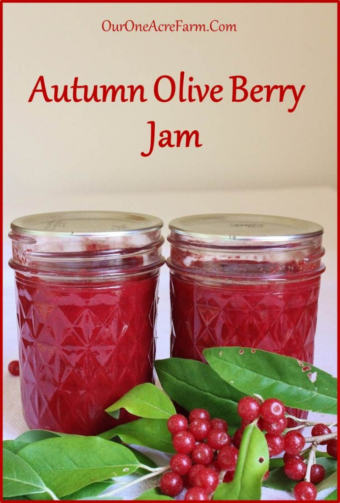 Autumn olive jam, made with an edible wild berry you can forage
