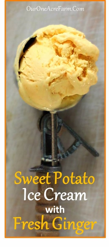 Sweet Potato Ginger Ice Cream. Deliciously spiced with fresh ginger!