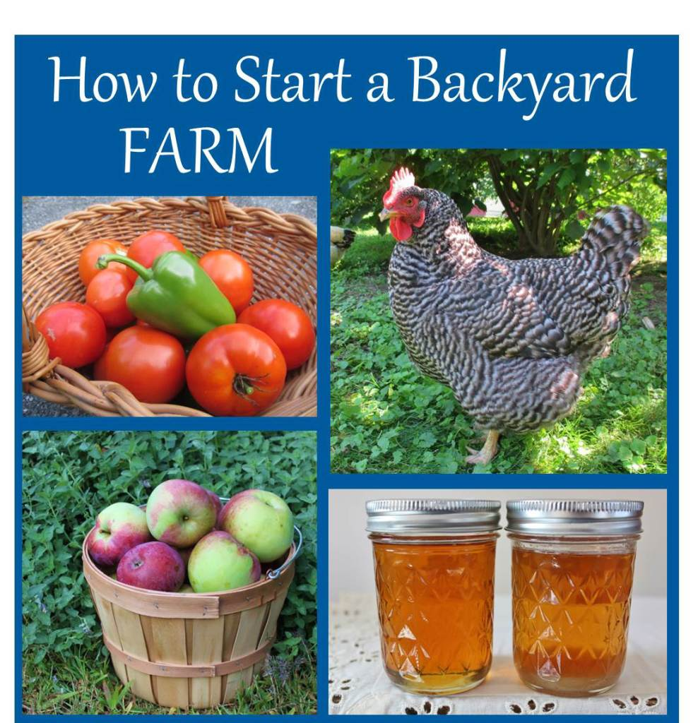 How to Start a Backyard Farm