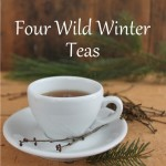 4 Wild Winter Teas and a Chocolate Drink