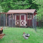 Designing the perfect chicken coop