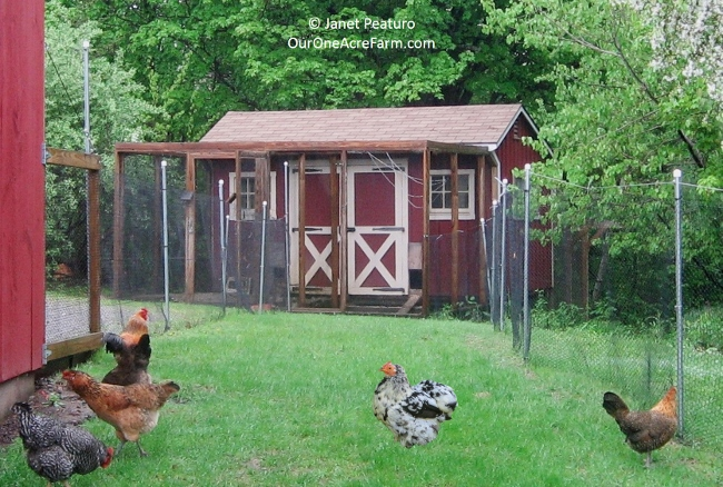 guide to designing the perfect chicken coop - Chicken Coop Ideas Design