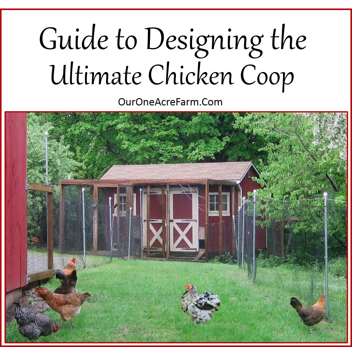 Guide To Designing The Perfect Chicken Coop