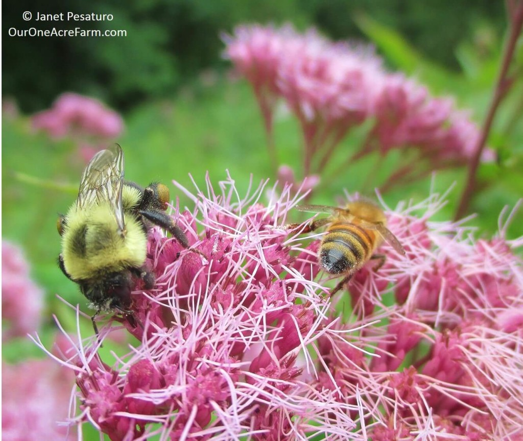 Native plants for food and medicine