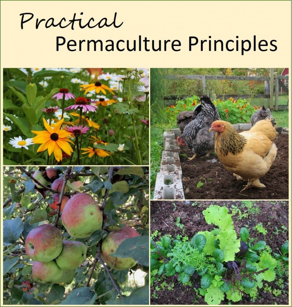 Permaculture Principles for Practical Gardeners and Farmers