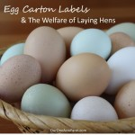 Egg Carton Labels And Animal Welfare