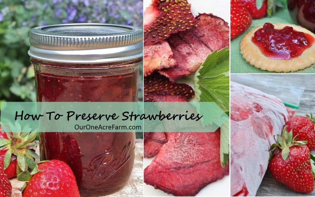 My favorite old fashioned recipes for strawberry jam, strawberry rhubarb preserves, strawberry chips, and frozen sugar packed strawberries, along with other methods, are featured in How to Preserve Strawberries.