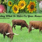 Deciding what to raise on your homestead or backyard farm involves taking inventory of your resources and yourself. This guides you through 15 critical considerations,
