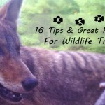 Reconnect with nature by reviving the ancient art of wildlife tracking. These tips & resources teach how to get started tracking animals by breaking a daunting task into manageable chunks & set you on the road to expertise. Includes reviews of my favorite tracking books.