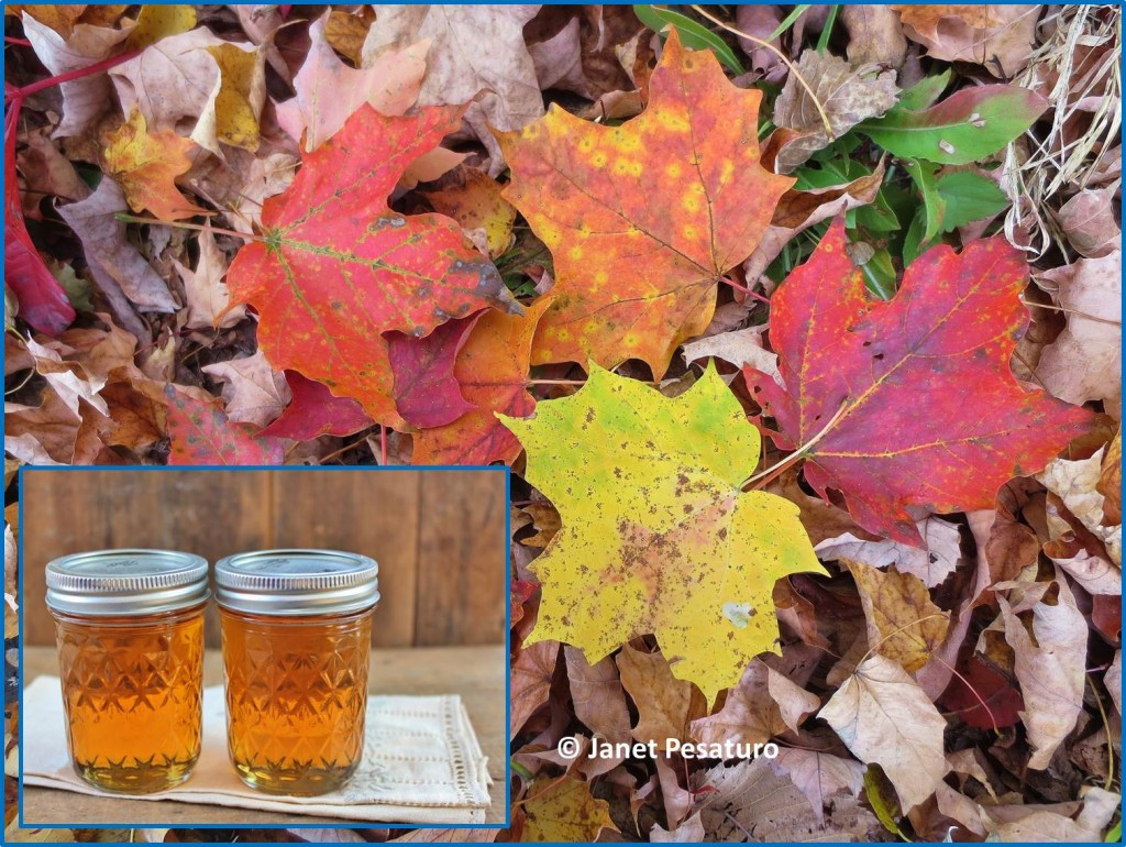 Learn how to make maple syrup, and you, too, can put up jars of liquid gold like these
