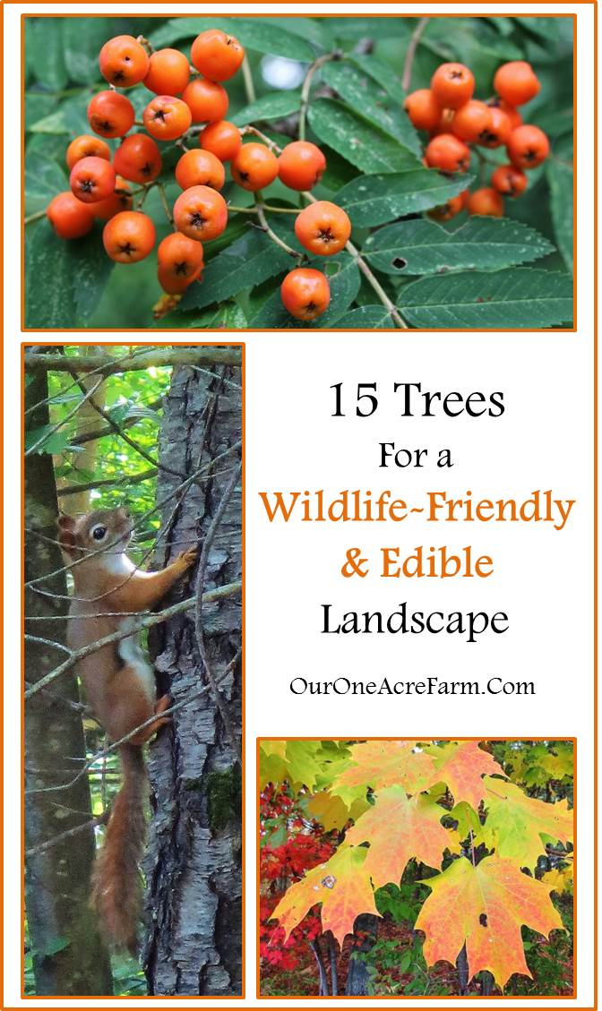 15 trees for a wildlife friendly edible landsape