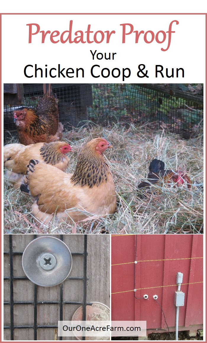 Predator Proofing Your Chicken Coop and Run |