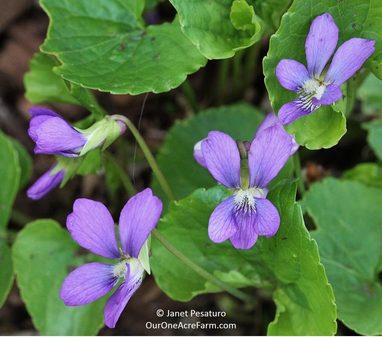 12 Native Plants For Food And Medicine