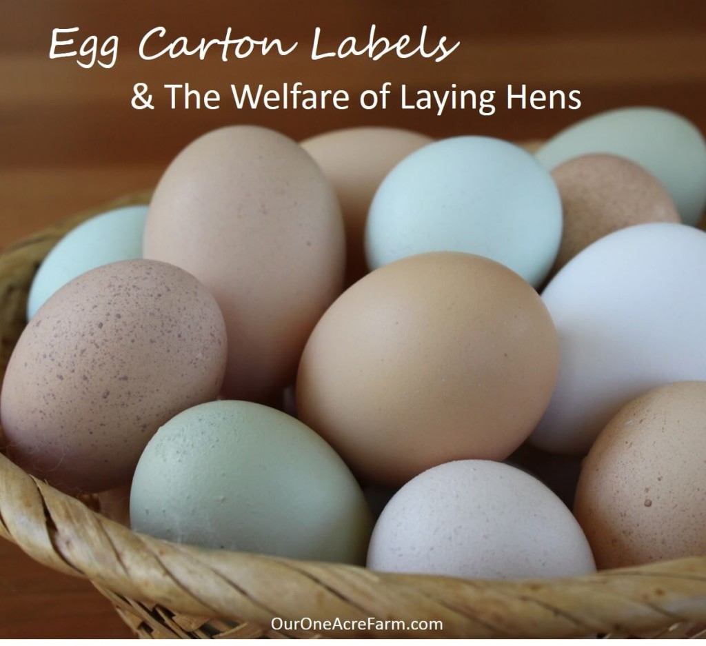 Egg Carton Labels And Animal Welfare Egg