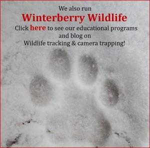 WinterberryLink